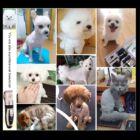 Állatszőr nyíró, elektromos kutya-macska szőrnyíró